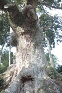 初詣☆豊川稲荷 in AICHI ☆2011