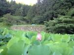 蓮花畑☆*・゜゚・*:.。..。.:*・虹∞日輪