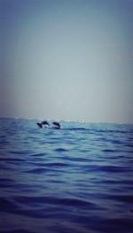 Dolphinに会いに∞Lovina Beachへ☆*:.。.Bali∞