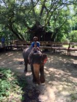 托鉢のお寄付の心∞*・☆象さんとの戯れ∞Elephant riding∞Laos