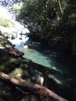 屋久島の輝く透明な川∞海∞*・゜゚・屋久島の仲間達♡*:.。..。.:*・2014
