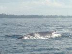 鯨とイルカに会いに∞☆Mirrisa∞Sri Lanka∞2017